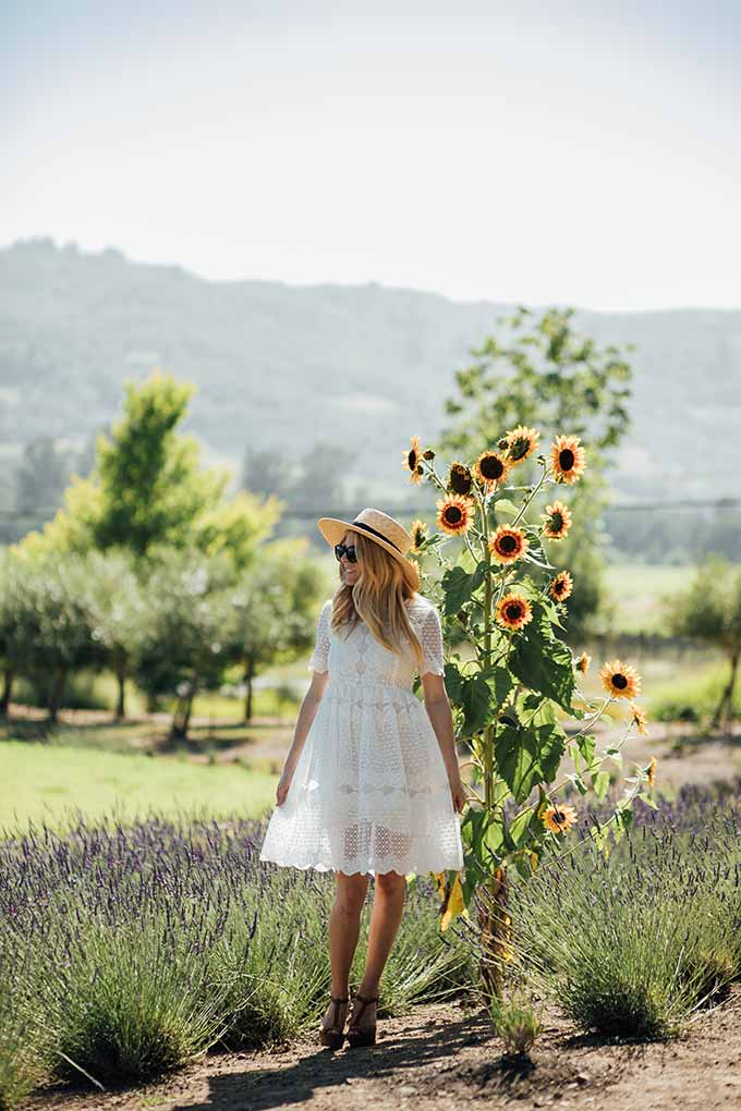 Lavender Fields Forever with Chic Wish