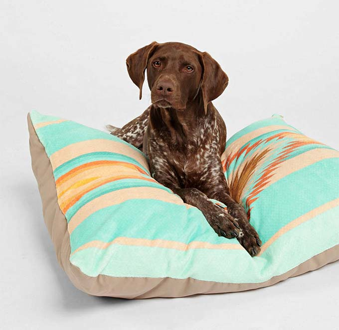 Fiesta Dog Bed from Urban Outfitters