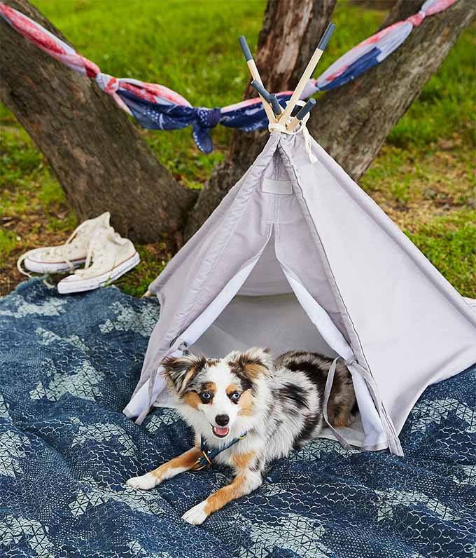 Canvas Pet Teepee from Free People